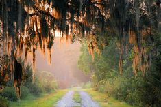 No place has Spanish Moss quite like South Carolina. Low Country, Country Roads, South Carolina Homes, Carolina Beach, Spanish Moss, Down South, Paradis, That Way, Places To See