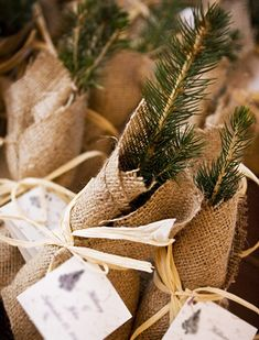 Tree sapling favors - winter wedding or Christmas party