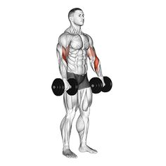 Gym Workout For Beginners, Gym Workout Tips, At Home Workouts, Adjustable Workout Bench, Adjustable Dumbbells, Biceps And Triceps, Biceps Workout, Muscle Fitness, Mens Fitness