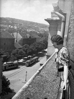Retek utca 29-31., kilátás a Szilágyi Erzsébet (Olasz) fasor és a Kis-Sváb-hegy felé.