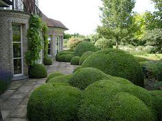 tuin met buxuswolken
