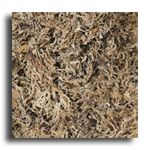 Oak Moss: The finishing touch in many of our projects!  Only $6.49