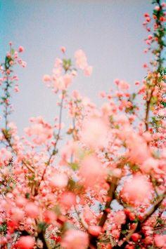 """Pigment Blog """"Doo Uap into Spring"""" #spring #Flowers #pigmentblog"""