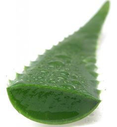 Pure Aloe Vera extract does wonders to moisturize hair...especially curly hair.  How to: Mix with water and in a spray bottle and place in fridge for curly hair moisturizer. #naturalhair #natural curls #curlyhaircare