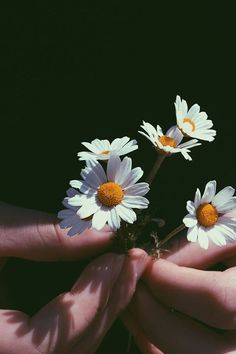 Close-Up Photography of Person Holding Chamomile Flowers Close-Up Photography of Person Holding Cham Daisy Wallpaper, Sunflower Wallpaper, Hand Photography, Close Up Photography, Flower Aesthetic, Aesthetic Images, Aesthetic Iphone Wallpaper, Aesthetic Wallpapers, Wallpapers Tumblr