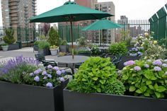 New York rooftop garden containers