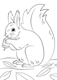 Fall Coloring Pages, Animal Coloring Pages, Coloring For Kids, Coloring Books, Adult Coloring Pages, Squirrel Coloring Page, Animal Drawings, Art Drawings, Free Printable Coloring Pages