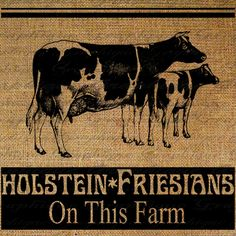 @Caitlin Havana Asvaraksh. Holstein Friesians Cow Calf Farm Animals Farming Vintage Sign Digital Image Download Pillows Tote Tea Towels Burlap No. 2560. $1.00, via Etsy.