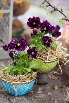 pansies, violets, violas *•. ❁.•*❥●♆● ❁ ڿڰۣ❁ ஜℓvஜ♡❃∘✤ ॐ♥..⭐..▾๑ ♡༺✿ ♡·✳︎· ❀‿ ❀♥❃.~*~. MON 21st MAR 2016!!!.~*~.❃∘❃ ✤ॐ ❦♥..⭐.♢∘❃♦♡❊** Have a Nice Day! **❊ღ༺✿♡^^❥•*`*•❥ ♥♫ La-la-la Bonne vie ♪ ♥❁●♆●○○○