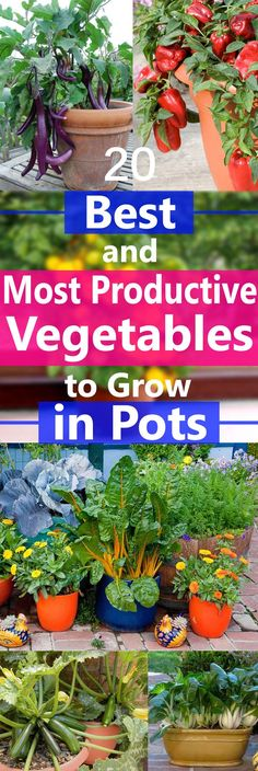 Most Productive Vegetables to Grow in Pots Try growing vegetables in any of Southern Patio's decorative planters. See our extensive assortment at: .Try growing vegetables in any of Southern Patio's decorative planters. See our extensive assortment at: .