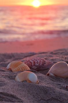 ❥ pink ocean breezesoocean