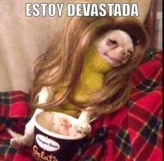 #Brangelina se utiliza para compartir memes del reciente divorcio Pitt-Jolie. http://mexico.srtrendingtopic.com/trend/79376/2016-09-21/2016-09-21/brangelina.html