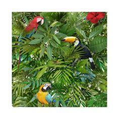 behang tropical jungle papegaai vogel behang 102555