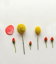 Sale Modern Botanical   Set of Four 8x8 by lucysnowephotography, $65.00