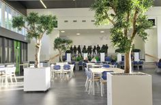 Artificial Olive trees in high gloss planters
