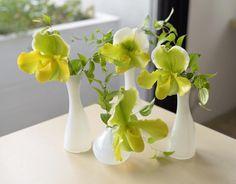 いいね!630件、コメント2件 ― Liling Liao//rirei ryoさん(@riring1205)のInstagramアカウント: 「. .  今週のデコルテさんのお花。 パフィオ。 .  白い花器とgreenのコントラストが、 あー可愛いぃ。 .  今日は新しい花器を色々とGETS。 .  早速来週から登場させよっと。✨🌸✨🌸 .」