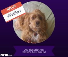 """Steve Cooke writes, """"Love it...my 42# English Cocker Spaniel rules the roost!!! He's the boss, and my best friend!"""" #petboss"""