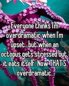 so everyone needs to pipe the fuck down about my drama. At least I don't go all octopus.