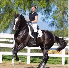Danish Warmblood..these are beauties!