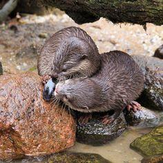 Ottertjes | Dieren | Zoom.nl