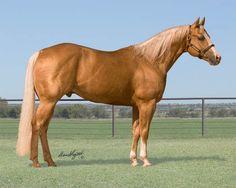 1806 Best Cool images in 2018 | Breyer horses, Horses, Bryer