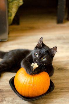 fall-hallows-eve:  Halloween cat2 by ReezyNu