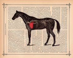 CV system of a horse on a dictionary page...