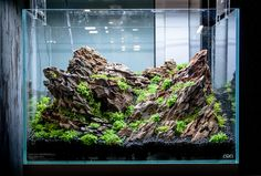 layout nature aquarium - Diego Marinelli