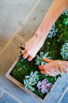 DIY succulent planter: http://www.stylemepretty.com/living/2015/08/30/diy-succulent-box-centerpiece/ | DIY: Fashionable Hostess - http://www.fashionablehostess.com/