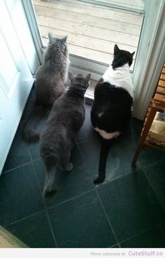 3 Very Curious Cats
