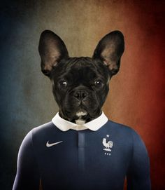 c5daa00e0 French Bulldog wearing the soccer jersey from his nation France