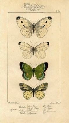 Butterfly Wall Art, Butterfly Wallpaper, Butterfly Background, Antique Prints, Vintage Prints, Wall Art Prints, Poster Prints, Vintage Wall Art, New Wall