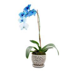 2019 Fashion Nightlight Potted Plant Home Office Indoor Bedroom Energy Saving Solar Light Fake Phalaenopsis Outdoor Led Decorative Flower Demand Exceeding Supply Lights & Lighting