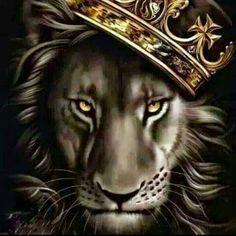 """""""Ne kadar çok bilirseniz o kadar az ihtiyacınız olur."""" Aborjin Atasözü Görsel sanat : lion with a crown"""