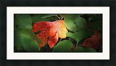 Sassafras Leaves Framed Print by Brian Mollenkopf Art Prints For Sale, Fine Art Prints, Framed Prints, Hanging Wire, Delaware, Fine Art America, Art Work, Ohio, Plant Leaves