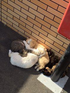 近所のセブンにて地域ネコたちが陽だまりで「ネコたまり₍˄·͈༝·͈˄₎◞ ̑̑ෆ⃛」になってたwww pic.…