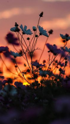 Nature is Life. Aesthetic Pastel Wallpaper, Aesthetic Backgrounds, Aesthetic Wallpapers, Beautiful Flowers Wallpapers, Beautiful Nature Wallpaper, Beautiful Pictures Of Flowers, Wallpaper Nature Flowers, Flowers Nature, Beautiful Sunset