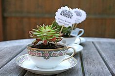 """favor tags for succulents-  plant stakes customized with names and dates.  Original design """"Let Love Bloom."""" on Etsy, $40.00"""