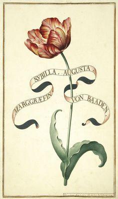 Karlsruher Tulpenbuch - Antique botanical tulip illustration.