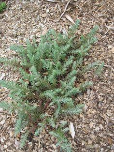 Quel est le nom de cette plante svp ? 17  05  2016.   Fran