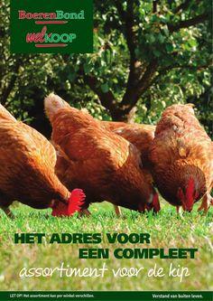 WIj hebben van alles in huis voor kippen, kijk op onze website voor de kippenspecial!