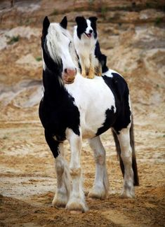Collie on a Pony's back--both faithful, both loyal, both close to man--if you treat 'em right, they just might save your life.