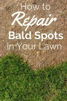 Bald spots in our lawn can be caused by several things, but the most common cause is pet urine.  Pets, especially dogs, have very strong urine, and they also tend to use the same spot over and over.  This kills the grass in that spot and leaves the homeowner with unsightly patches. #lawn #garden #gardening