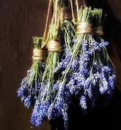 Geniet het ganse jaar van de geur van lavendel, hoe droog je lavendel.