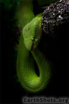 Patience by Payton Ruddock was photo of the day on May Earth Shots is a photo of the day contest celebrating the beauty and diversity of our planet. Les Reptiles, Reptiles And Amphibians, Zoo Animals, Cute Animals, Mundo Animal, Unique Animals, Animal Fashion, Naturally Beautiful, Lizards