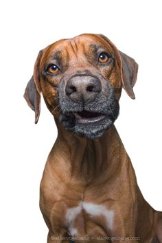 Intimate Portraits Reveal Amusing Facial Expressions of Skeptical Dogs Skeptical Dogs, Cool Cat Toys, Pet Photographer, Training Your Dog, Training Tips, Dog Portraits, Funny Animal Pictures, Dog Grooming, Animal Photography