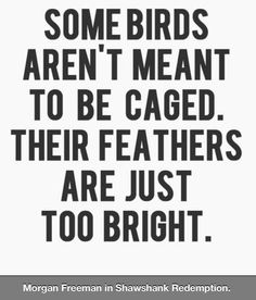 Shawshank Redemption.this qoute applies to me because people have tried to cage and imprison me all my life,but i have always felt that i was someone who wasn't meant to be caged,just like andy in my favorite movie.
