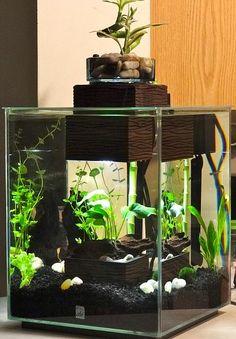 1000 images about mini aquariums on pinterest nano for Fluval chi fish tank