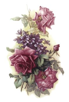 Pretty shades of purple roses