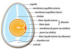 Quoi de neuf sur l'œuf- AREHN - Agence régionale de l'environnement de Haute-Normandie